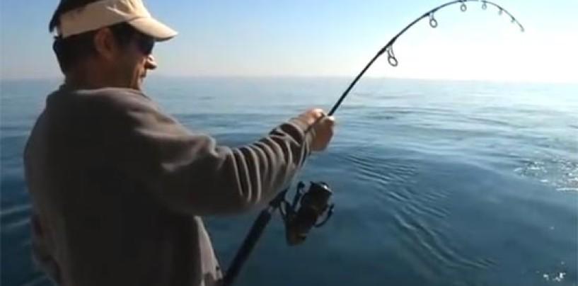 Se prohíbe la pesca a jigging desde embarcación en Canarias