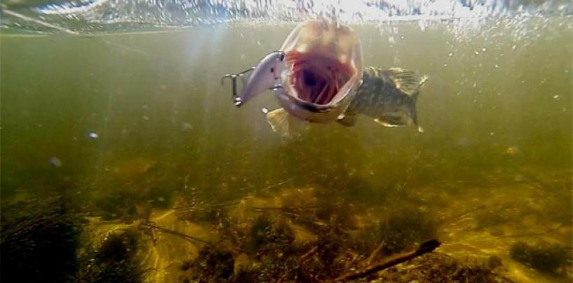 MAGIX Fastcut, la mejor forma de editar tus vídeos de pesca