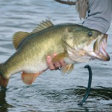 Como pescar black basses inactivos utilizando diferentes técnicas