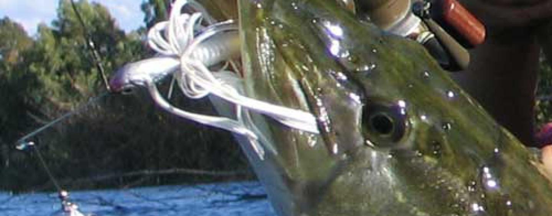 Spinnerbaits, chatters y buzzers. Los especialistas en grandes capturas