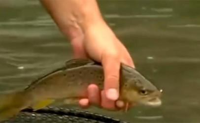 Pesca a la polaca, una modalidad clave cuando los ríos están tomados