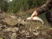 Video de pesca de barbos con cucharilla