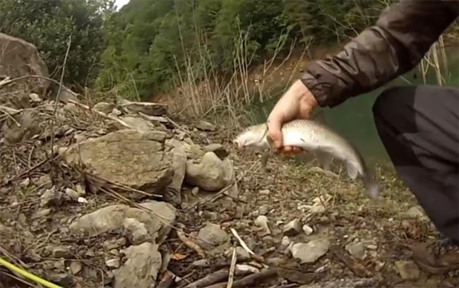 pesca-de-barbos-cucharilla