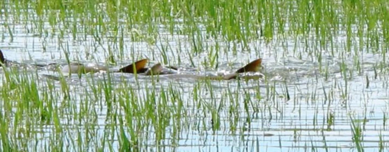 Carpfishing en el mes de mayo: final del desove y buenas capturas