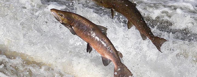 Pezcador al día, principales noticias de pesca (Mayo 2015, 2)