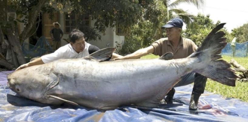 Mekong un paraíso amenazado
