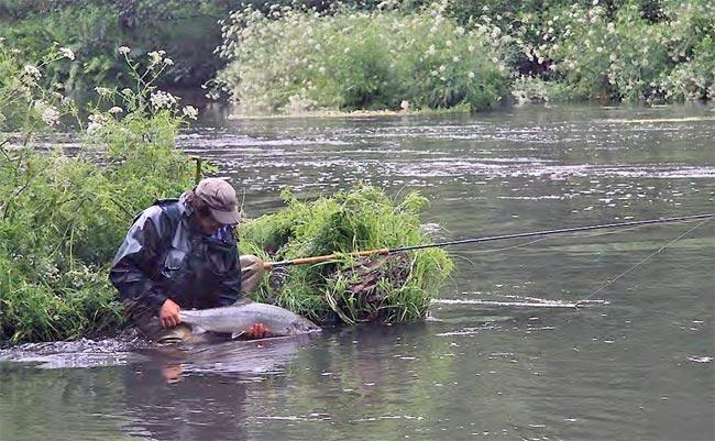 salmon-bidasoa