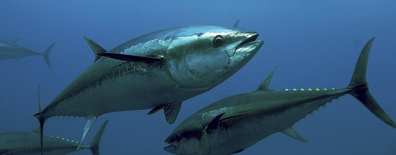 Atrévete con la Pesca deportiva de atún
