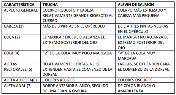 DIFERENCIAS TRUCHA Y ALEVÍN DE SALMÓN