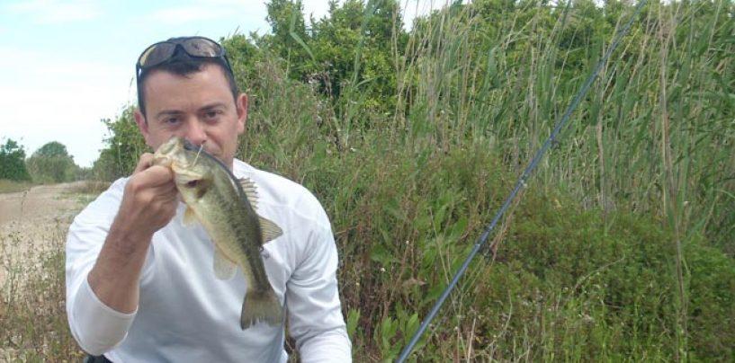Señuelos duros básicos para la pesca de black bass desde orilla