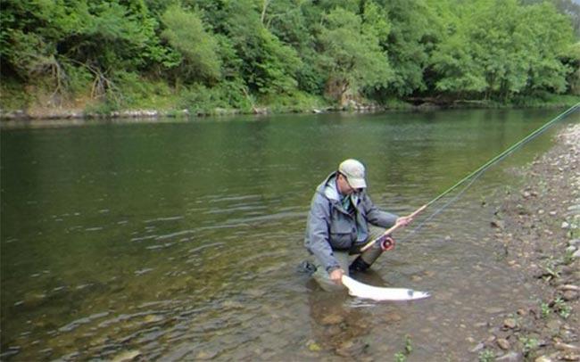 salmon-asturias