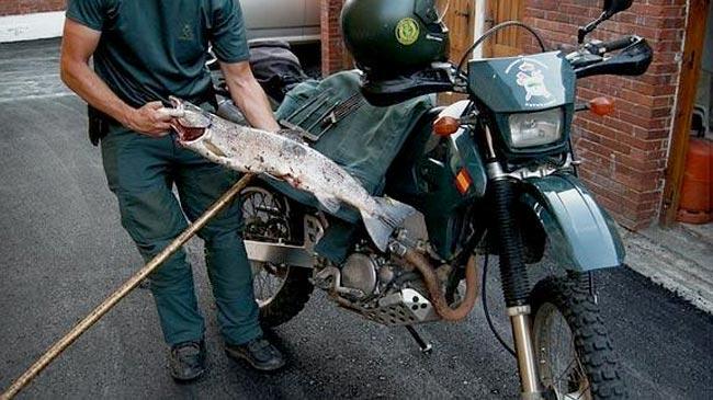 salmones-furtivos
