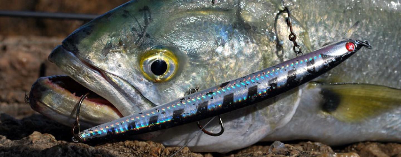 Como enfocar la apasionante pesca de la anjova