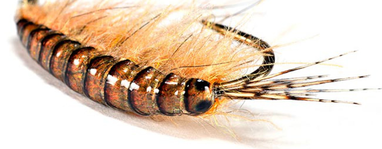 Gammarus, una mosca para todo el año