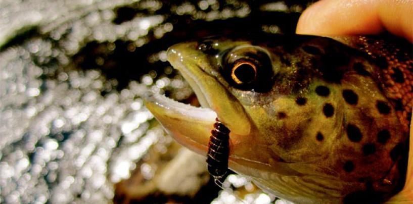 Pesca a la polaca, ninfas lastradas para que no se escape ni una trucha