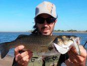 Colores, esencias y marcas de vinilos de pesca