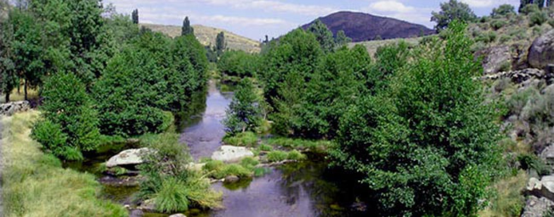 Pesca en la zona libre sin muerte de Venta Rasquilla (Río Alberche)