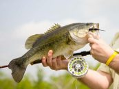 Otoño, un gran momento para la pesca del black bass a mosca