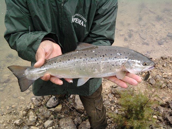 salmon-alarcon-3
