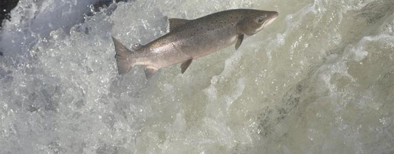 Como conseguir permisos de cotos de pesca en Asturias