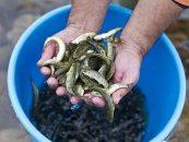 Pezcador al día, principales noticias de pesca (Octubre 2015, 1)