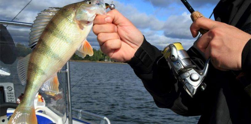 Pezcador al día, principales noticias de pesca (Febrero 2017, 4)