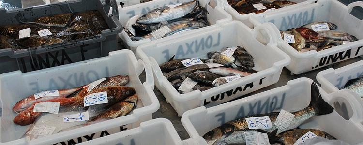 precio del pescado