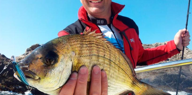Sargos a spinning desde embarcación: Una pesca muy técnica, exigente y divertida no apta para todos