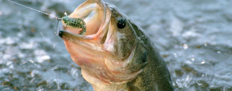 La pesca del black bass con vinilos en invierno
