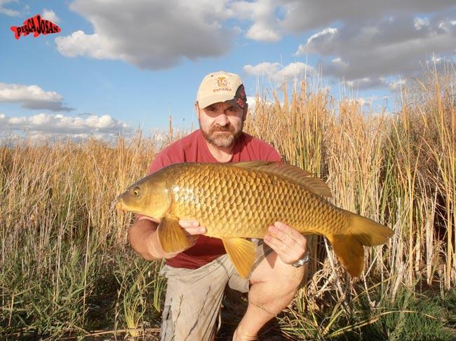 pescar grandes carpas