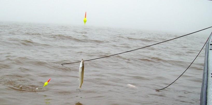 La pesca de pejerrey en Argentina