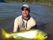 Vídeo de pesca de dorados en Argentina