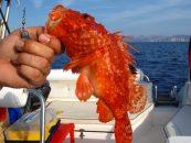 Pezcador al día, principales noticias de pesca (noviembre de 2015, 2)