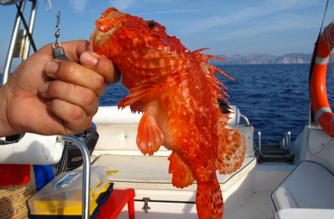 pesca-medas