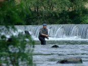 Comienza la temporada del salmón y reo en Galicia, con dudas, esperanzas y el nivel de los ríos como si fuera julio