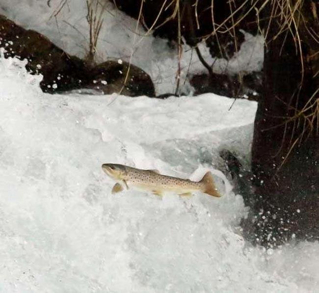 salmon-freixa-rio-tea