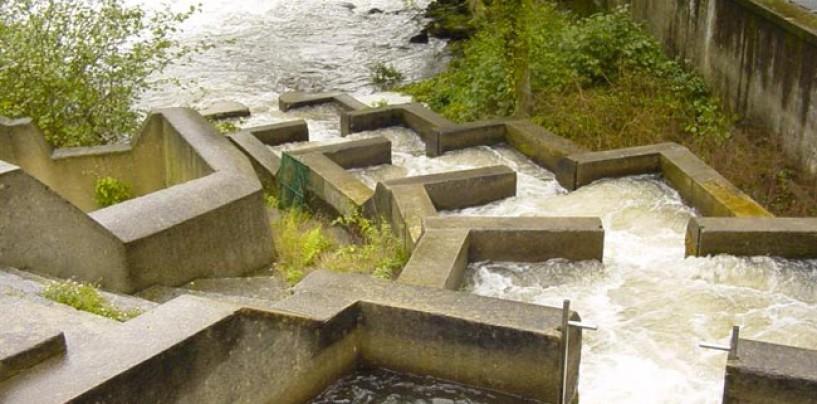 Los ríos salmoneros de España (XI): El salmón en el río Eo, riqueza a preservar entre dos comunidades