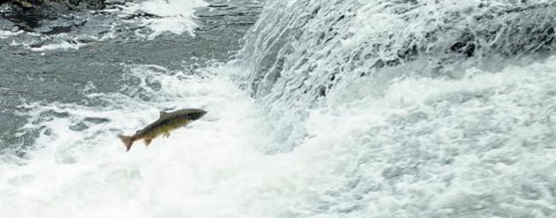 Pezcador al día, principales noticias de pesca (Diciembre 2015, 2)