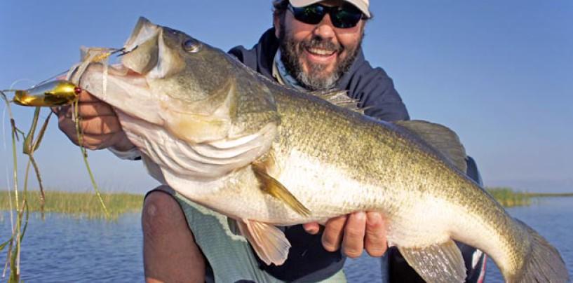 ¿Por qué hay tanta diferencia de tamaño de Black Bass entre diferentes lugares?
