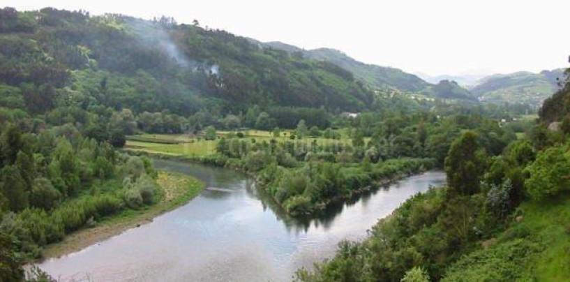 Los ríos salmoneros de España (XVI): El salmón en el Nalón-Narcea, el más salmonero pero con limitaciones