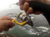 Vídeo de pesca: Pesca de lubinas con paseantes
