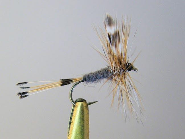 mosca-adams-1