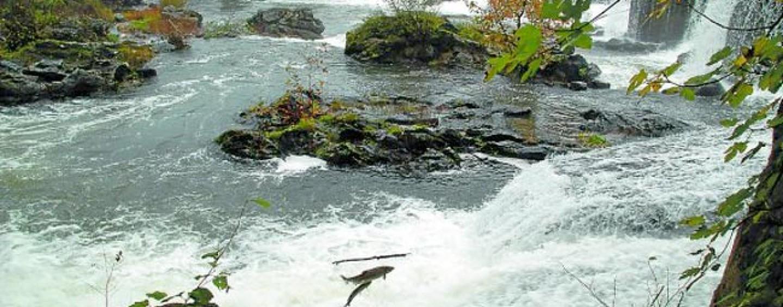 Pezcador al día, principales noticias de pesca (Enero de 2016, 3)