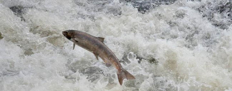 Pezcador al día, principales noticias de pesca (enero 2016, 5)