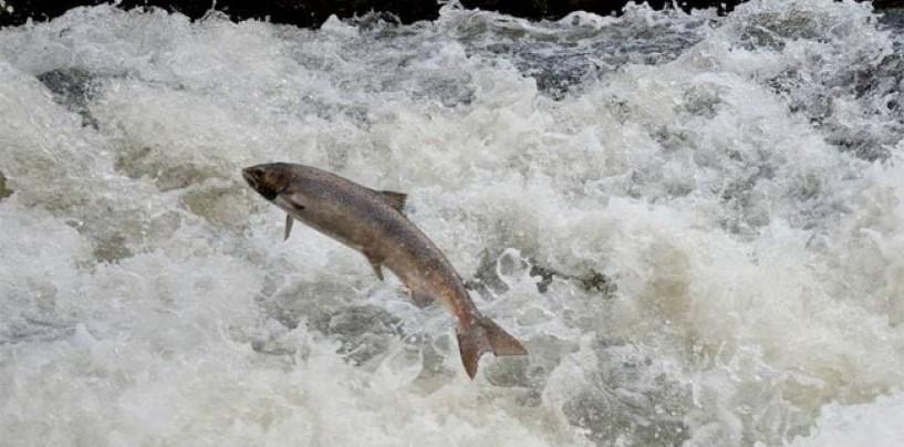 Pezcador al día, principales noticias de pesca (Diciembre 2017, 3)