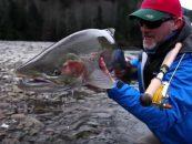Video de pesca: El skeena, el paraíso de la pesca de la trucha arcoíris steelhead