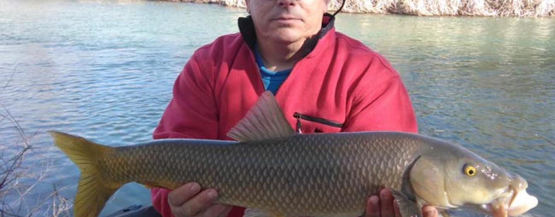 Invierno: buena época para la pesca del barbo
