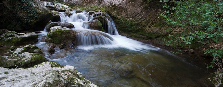 Los ríos salmoneros de España (XVIII): El salmón en el río Bedón y el río Puron, dos pequeños ríos a proteger