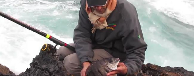 Pezcador al día, principales noticias de pesca (Noviembre 2017, 3)