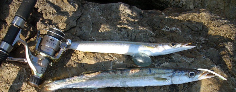 Pesca de espetones a spinning, diversión asegurada.